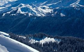 Картинка зима, лес, снег, пейзаж, природа, обои, гора