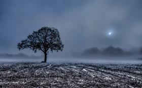 Картинка туман, утро, поле, жнивьё, дерево
