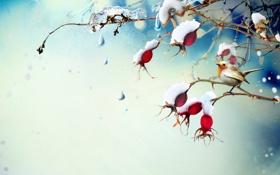 Обои лёд, снег, птичка, ветка, ягоды