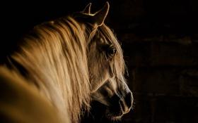 Картинка фон, морда, конь
