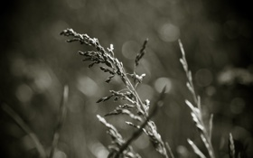 Обои обои, трава, поле, макро, фото