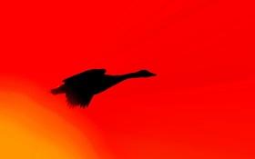 Картинка птица, крылья, силуэт, зарево