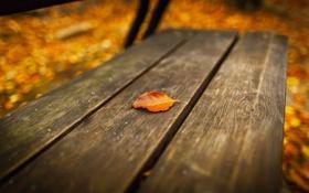 Картинка осень, лист, скамья