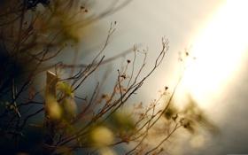Обои осень, макро, ветки, природа, фото, фон, обои