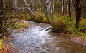 Обои осень, лес, деревья, ручей, кусты, берега