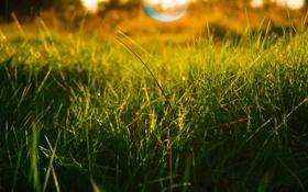Картинка солнце, макро, закат, желтый, зеленый, Трава