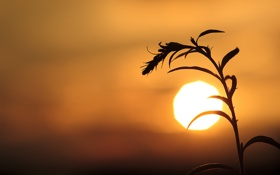 Обои солнце, природа, ветка, вечер