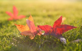 Картинка трава, листья, солнце, макро, фото, фон, обои