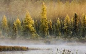 Обои пейзаж, лес, водоем, дымка, озеро, деревья, туман