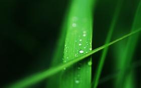 Картинка трава, вода, капли, Макро, зеленая, травинка