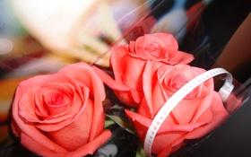 Обои розовый, романтика, розы