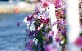 Обои landscape, cosmos, sea of flowers