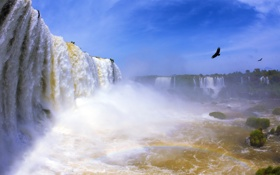 Картинка птицы, водопад, радуга
