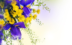 Обои цветы, ирисы, хризантемы