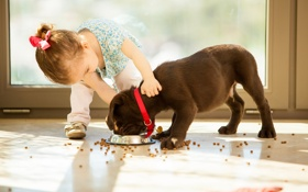 Картинка собака, девочка, щенок, корм
