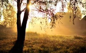 Обои свет, природа, дерево, утро