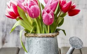 Обои тюльпаны, лейка, flowers, tulips, spring
