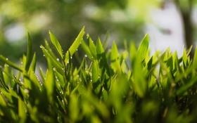 Обои трава, макро, роса, зеоень