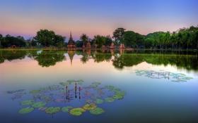 Картинка озеро, парк, Таиланд, храм, лотосы