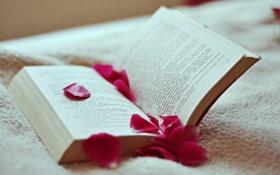 Обои текст, лепестки, книга