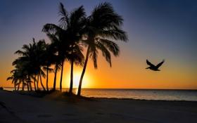 Обои море, небо, пальмы, рассвет, птица, берег, силуэт