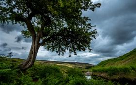 Картинка камни, трава, ручей, дерево, Англия, Weardale, луга