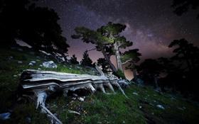 Обои звезды, деревья, ночь, камни, бревна, млечный путь, Italy