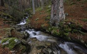 Картинка осень, лес, ручей, камни, мох