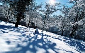 Картинка пейзаж, небо, солнце, в снегу, лес, искрится, ясный денёк