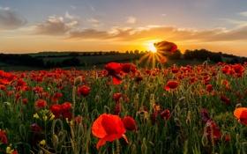 Картинка закат, небо, солнце, маки, природа, поле, цветы