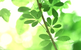 Обои зелень, лето, листья, макро, деревья, природа, ветка