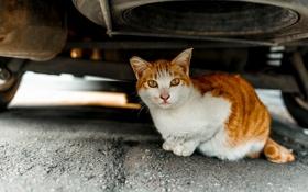 Картинка машина, кошка, взгляд