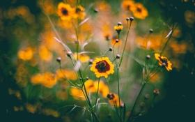 Обои стебли, лепестки, жёлтые, боке, полевые цветы
