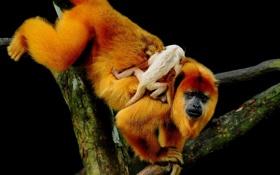 Картинка животные, дерево, обезьяна, детёныш, мордаха