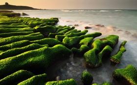 Обои море, водоросли, камни