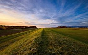 Обои поле, небо, деревья, вечер, горизонт, травка