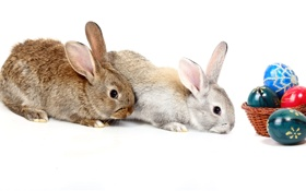 Обои яйцо, пасха, пара, кролики, easter