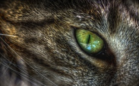 Обои кошка, макро, глаз, зелёный, кошачий