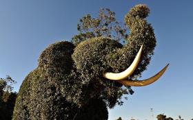 Картинка животное, Слон, фигуры