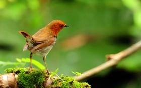 Картинка природа, птица, ветка, перья, цвет