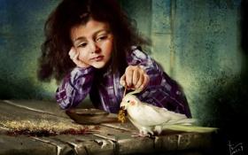 Картинка стол, птица, игра, арт, попугай, девочка, колосок