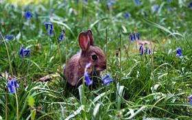 Картинка трава, кролик, цветы
