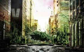 Обои природа, город, дерево, здания, разруха