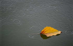 Картинка вода, природа, лист