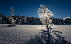 Картинка зима, свет, снег, деревья, пейзаж