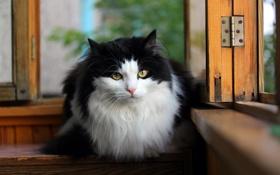 Обои кошка, взгляд, окно