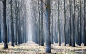 Картинка трава, лужи, красивые обои для рабочего стола, деревья, ветви, природа, ветка