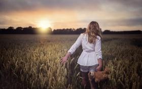 Обои поле, девушка, пейзаж, закат, мишка