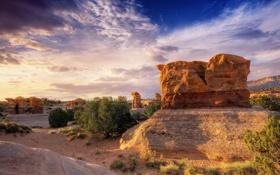 Обои камни, скалы, каньон, кусты