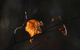 Картинка осень, свет, фон, ветка, листик, тени, последний